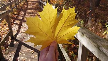 Declan holding a big yellow maple leaf